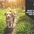 CBD Dog Treats – Here is What You Should Know